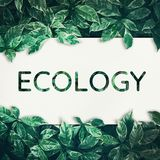 Ecology text with green leaf.friendly,eco environment,concept Stock Photo