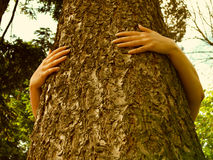 Ecology and tree. Female hands embracing a big tree royalty free stock photography