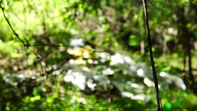 Ecology in wild forest in focus stock footage