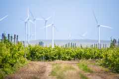 Ecology wine vineyard plantation with wind turbines Stock Images