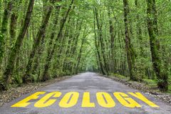 Jungle road to ecology. Ecology word written on jungle road with tall tree two side, green road royalty free stock photos