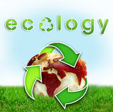 Ecology World map on an apple. Red apple with a map of the world cut into it, on green grass. Go green Ecology Stock Image