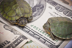Economía de la tortuga Foto de archivo