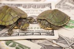 Economia da tartaruga Fotos de Stock Royalty Free