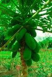 Economia sufficiente, verdura che pianta per mangiarsi Fotografia Stock Libera da Diritti