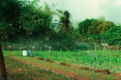 Economia sufficiente, verdura che pianta per mangiarsi Fotografie Stock