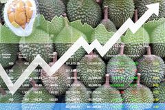 Economic financial stock index growth on Asian fruits. Economic financial stock index growth on Asian fruits  export market background shown chart and graph Royalty Free Stock Photos