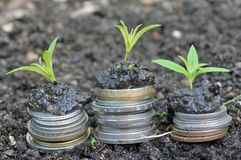 Economic growth concept with coins and plants stock image