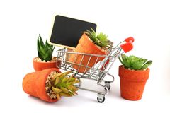 Economy , business about nature and cactus , shopping cart supermarket on white background stock photo