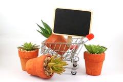 Economy , business about nature and cactus , shopping cart supermarket on white background. Economy , business about nature and cactus is on shopping cart stock photography