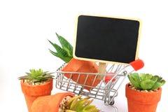 Economy , business about nature and cactus , shopping cart supermarket on white background. Economy , business about nature and cactus is on shopping cart stock photos