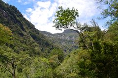 Ecoregion of the Valdivian temperate rainforests in southern Chile Chilean Patagonia. The Valdivian temperate forest is an ecoregion on the west coast of Stock Photo