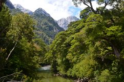 Ecoregion of the Valdivian temperate rainforests in southern Chile Chilean Patagonia. The Valdivian temperate forest is an ecoregion on the west coast of Stock Images