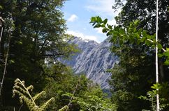 Ecoregion of the Valdivian temperate rainforests in southern Chile Chilean Patagonia. The Valdivian temperate forest is an ecoregion on the west coast of Royalty Free Stock Photography