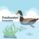 Ecosistema del agua dulce Imagen de archivo libre de regalías