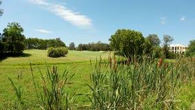 Ecosistema della zona umida della palude con Reed, Cattail, Typhaceae dell'erba della tifa lungo il bordo di un corse di golf video d archivio