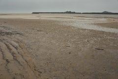 Ecosistema di marea del mudflat, Guiana francese immagine stock