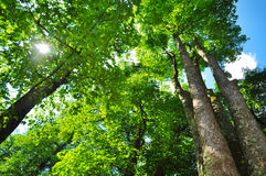 Ecosistema forestale fotografie stock