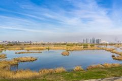 Ecosistema urbano Foto de archivo