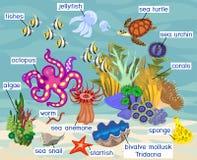 Ecossistema do recife de corais com os habitantes marinhos diferentes com títulos ilustração do vetor
