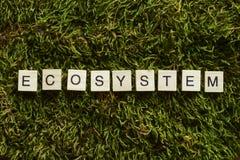 Ecosysteem met houten brieven gekubeerde vorm op het groene gras wordt geschreven dat stock foto's