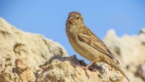 Ecosystem, Bird, Fauna, Beak Royalty Free Stock Image