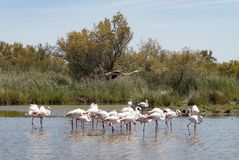 Ecosystem, Bird, Nature Reserve, Wetland stock images