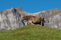 Ecosystem, Cattle Like Mammal, Sky, Grassland Royalty Free Stock Photography