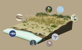 Ecosystem coast, beach. Digital illustration Stock Photography