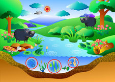 Ecosystem diagram. Art for graphic or website layout Stock Photography