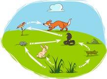 Ecosystem-diagram Royalty Free Stock Photo