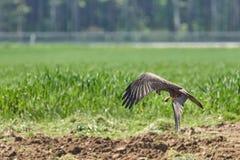 Ecosystem, Fauna, Bird, Nature Reserve Stock Photography