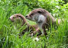 Ecosystem, Fauna, Mammal, Nature Reserve Stock Photography