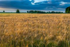 Ecosystem, Field, Crop, Grassland stock image