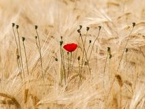 Ecosystem, Flower, Field, Grass Family stock images