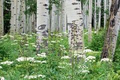 Ecosystem, Flower, Plant, Tree Stock Photo