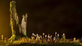 Ecosystem, Grass, Phenomenon, Night Royalty Free Stock Images