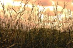 Ecosystem, Grass, Vegetation, Grass Family royalty free stock photos