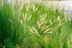 Ecosystem, Grass, Vegetation, Grass Family royalty free stock image