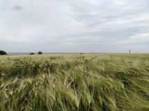 Ecosystem, Grassland, Field, Crop royalty free stock image