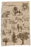 Ecosystem - An hand drawn collection. Animals. Royalty Free Stock Images