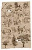 Ecosystem - An hand drawn collection. Animals. An hand drawn collection - Ecosystem - Pyramid. Vector pack Stock Photos
