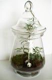 Ecosystem in a jar Stock Photos