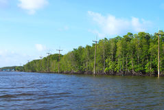 The ecosystem of mangrove poles with electrical power stock photo
