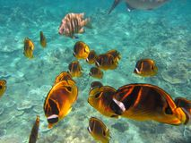 Ecosystem, Marine Biology, Coral Reef Fish, Underwater stock photos