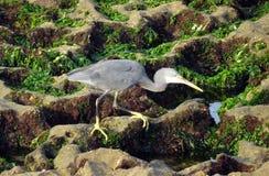 Ecosystem, Nature Reserve, Fauna, Bird Royalty Free Stock Photo