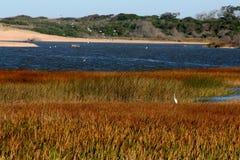 Ecosystem, Nature Reserve, Wetland, Marsh