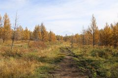 Ecosystem, Path, Wilderness, Nature Reserve royalty free stock image