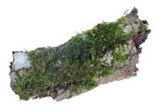 Ecosystem on a piece of pine bark concept. Natural european forest green moss and lichen plant. Isolated. On white studio macro shot royalty free stock photos