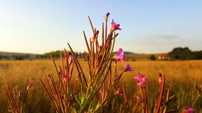 Ecosystem, Prairie, Field, Grassland royalty free stock photo
